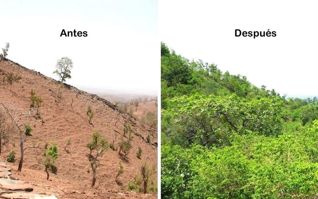 Comunidad une fuerzas para reforestar cientos de hectáreas y salvar su aldea de la desertificación