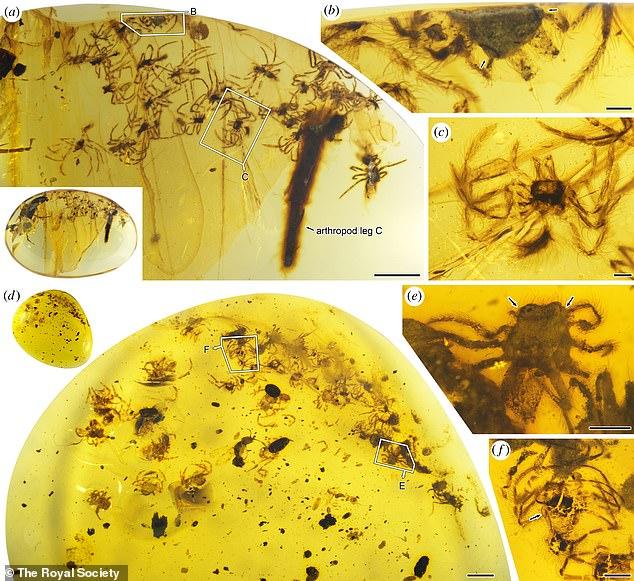 El equipo halló 24 arañitas, la mayoría de las cuales están deformadas y rotas. Y otra pieza fue encontrada con 26 arañas bebé y otro con de ellas 34