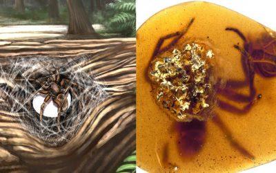 Amor eterno: hallada araña madre protegiendo a sus crías preservados en ámbar de 99 millones de años