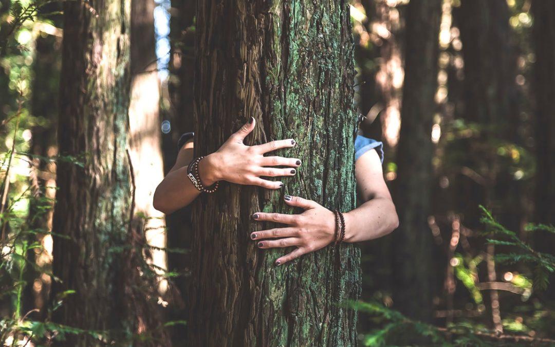 Biólogo asegura que los árboles hablan un «idioma» que podemos aprender