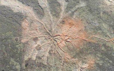 El bosque más antiguo conocido del mundo no era como se pensaba, revela investigación