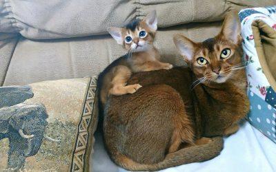 Científicos estudiaron miles de gatos e identificaron siete rasgos de personalidad distintos