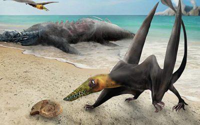 """Descubren fósil de """"dragón volador"""" en el desierto de Atacama en Chile"""