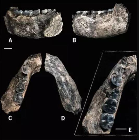 El fósil más antiguo conocido del género Homo, este trozo de mandíbula, fue descubierto en un sitio llamado Ledi-Geraru en el estado regional de Afar, Etiopía