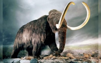 """Biocientíficos tienen un nuevo plan para """"resucitar"""" al extinto mamut lanudo"""