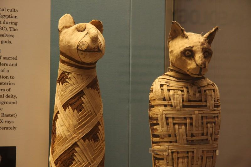 Gatos momificados en el antiguo Egipto