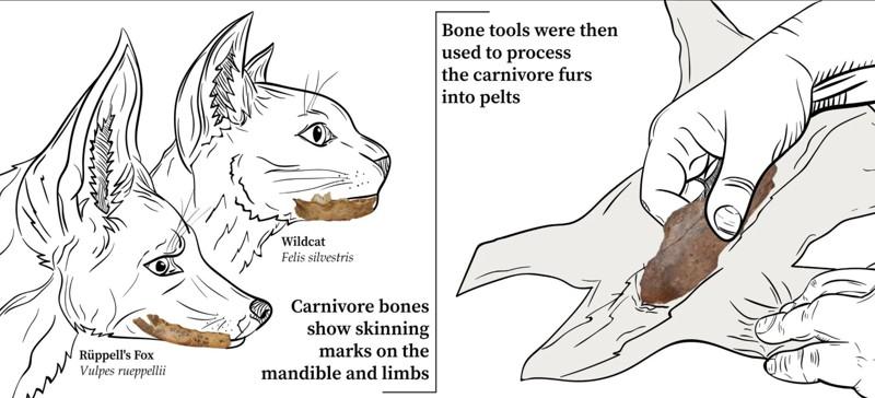 Los carnívoros fueron desollados y se utilizaron herramientas de hueso para preparar las pieles