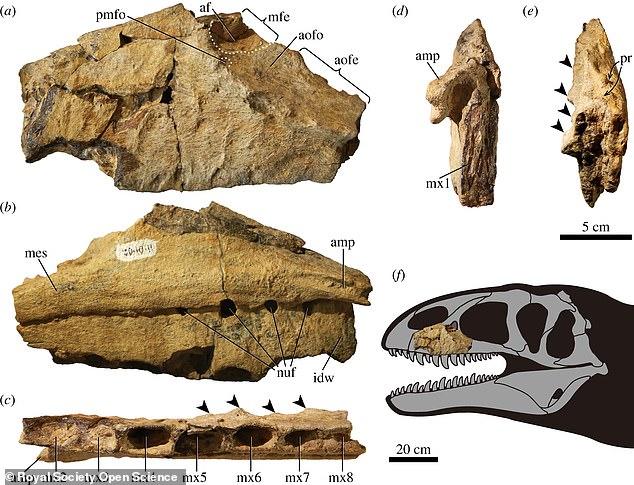 Ulughbegsaurus fue identificado por su mandíbula izquierda y dientes enterrados en rocas en un cementerio de dinosaurios conocido como la Formación Bissekty