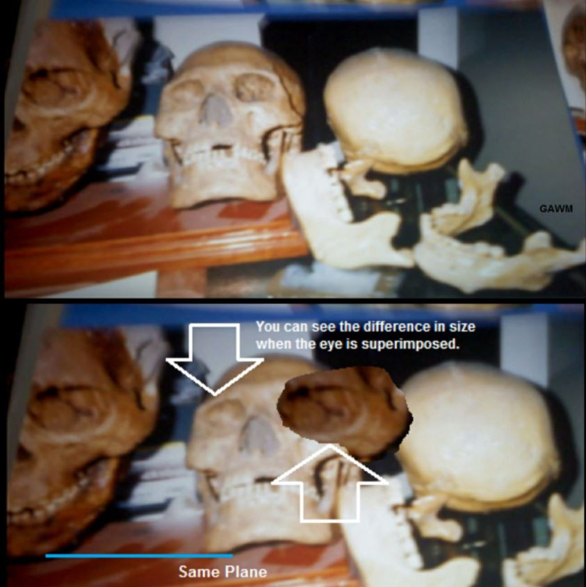 Don Monroe tomó esta fotografías hace más de 40 años. Se puede ver la diferencia de tamaños entre los cráneos